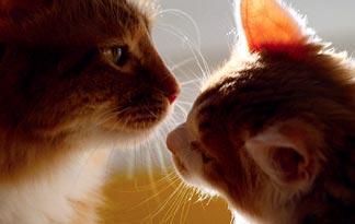 how-to-host-a-summer-cat-social0