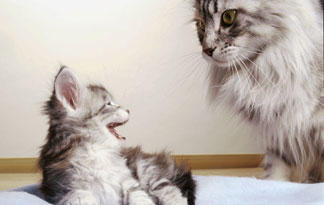 how-to-introduce-a-new-cat-to-an-old-cat0