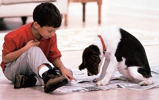 how-to-paper-train-small-dogs0