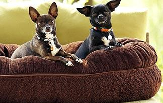 introduce-small-dogs-to-pets0