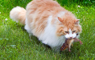 most-common-cat-diseases3