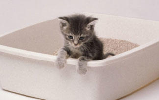 most-common-cat-diseases4