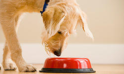 nutritional-essentials-for-dog-250x150