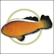 orangeskunkclown0
