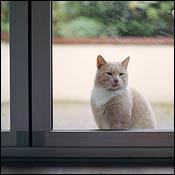 outdoor-cat-indoor-cat0