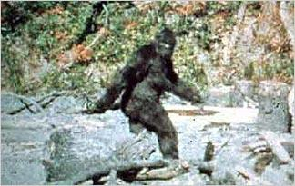 paterson-gimlin-footage-324x205