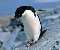 penguin-city-facts0