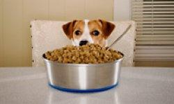 Dog Allergy Treatments | Healthy Dogs | Animal Planet