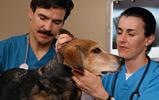 pet-healthcare0