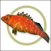 pixyhawkfish0