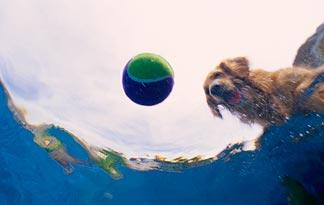 pool-games-for-pups2