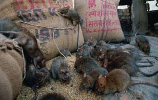 rat-top-ten-08-325x205