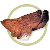 roguefish0