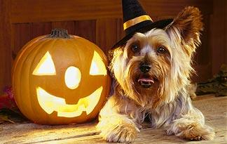 safety-tips-celebrate-halloween-pet0