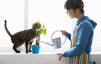 simple-ways-to-green-your-pet0