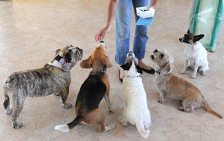 small-dogs-doggie-day-care0