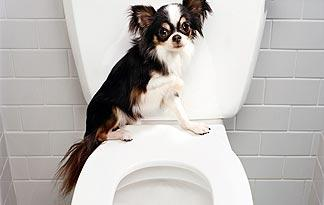 small-dogs-potty-training-alternatives0