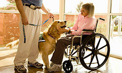 therapy-dog-training-250x150