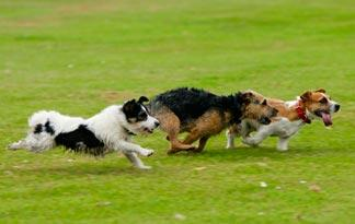 tips-quiet-small-yapping-dog1