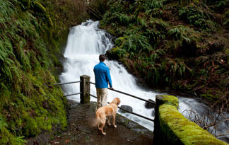 dog friendly nature trails near me