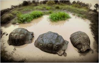 top-10-weird-turtle-facts0