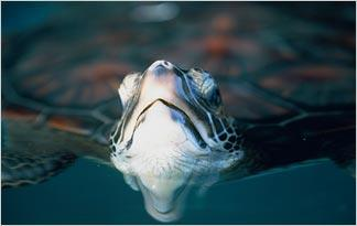 top-10-weird-turtle-facts1