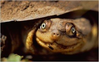top-10-weird-turtle-facts10