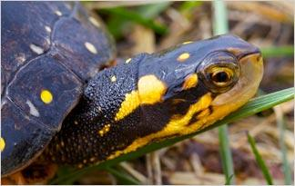 top-10-weird-turtle-facts6