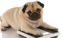 update-home-remedies-overweight-dogs-250x150
