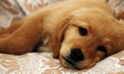 update-nurse-ailing-dog-250x150