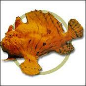 wartskinfrog0