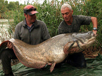 wels-catfish-01