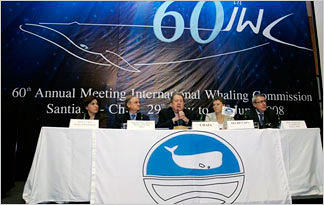 whales-whaling-iwc-treaty-whaling0