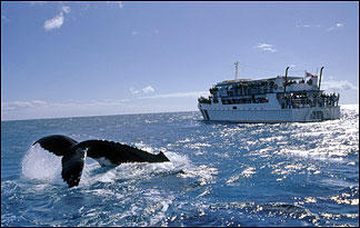whaling-opposition-to-whaling0