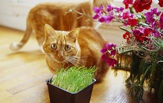 why-do-cats-eat-grass0