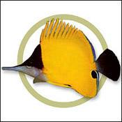 yellowbutter0