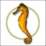 yellowseahorse0