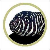 zebraeel0