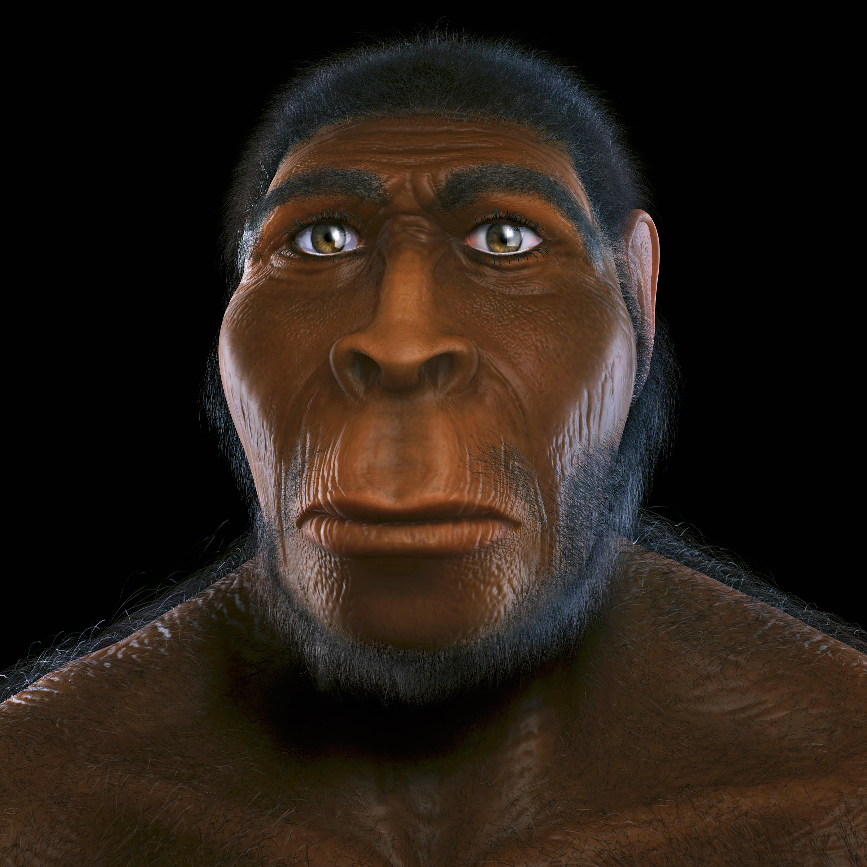 """A Family Tree: """"Hobbits"""" and Our Human Ancestry   Cannibal ..."""