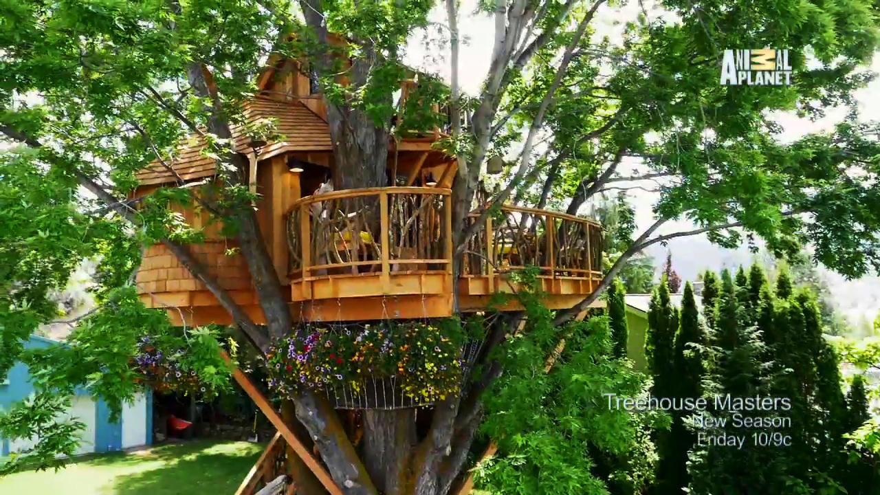... Season of Treehouse Masters EVER | Treehouse Masters | Animal Planet Animal Planet Online Games