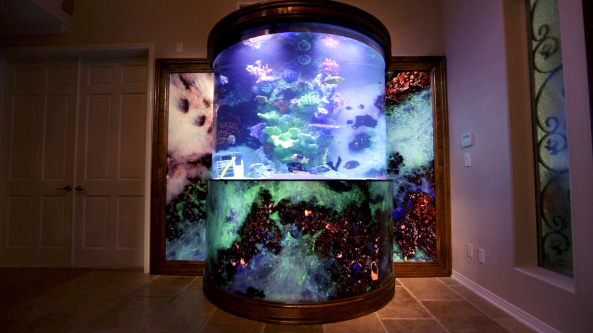 A truly hofftastic tank tanked animal planet for Atm fish tank