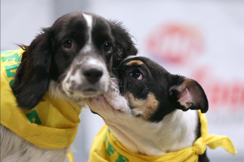 Puppy Bowl Kiss Cam