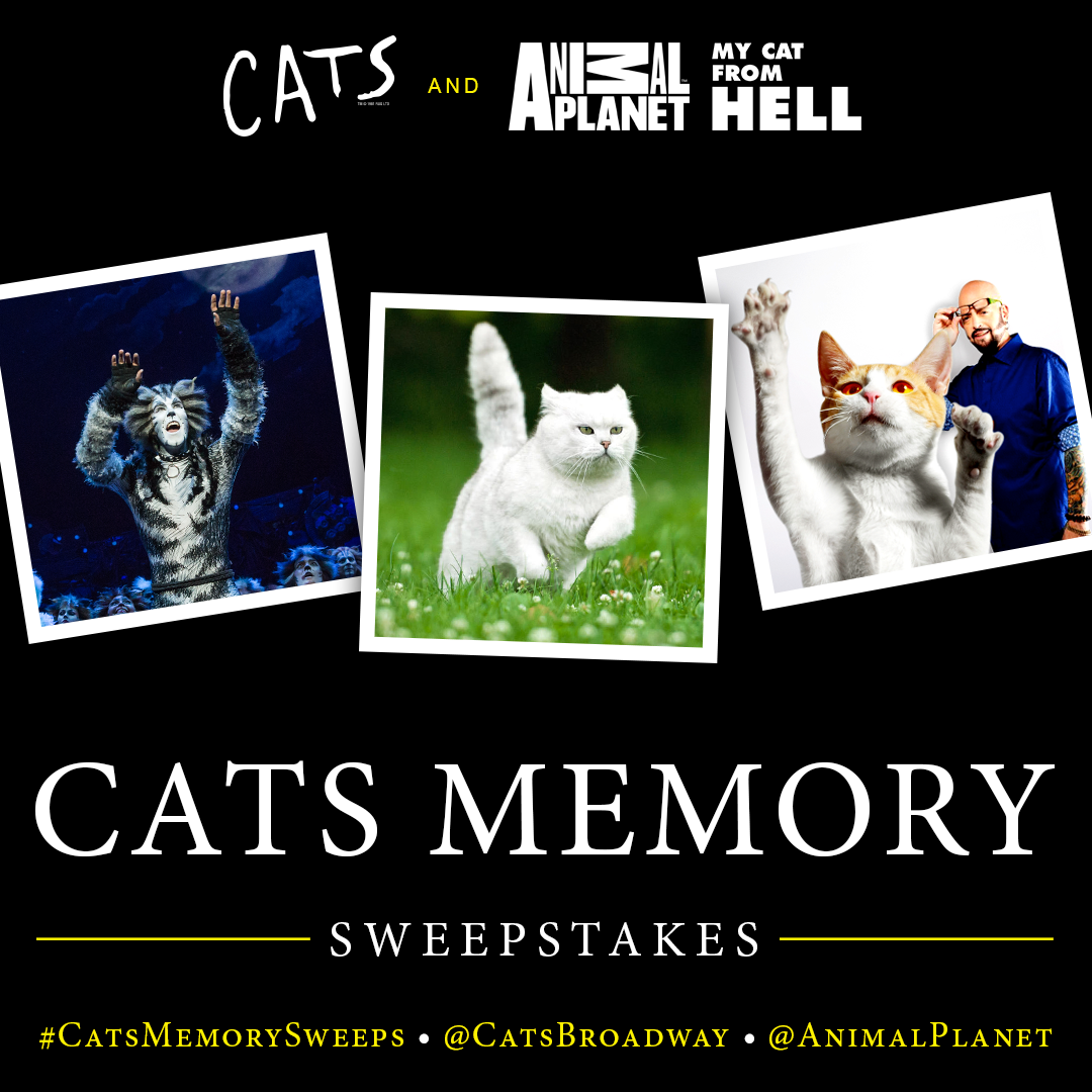 Cats Memory Sweepstakes
