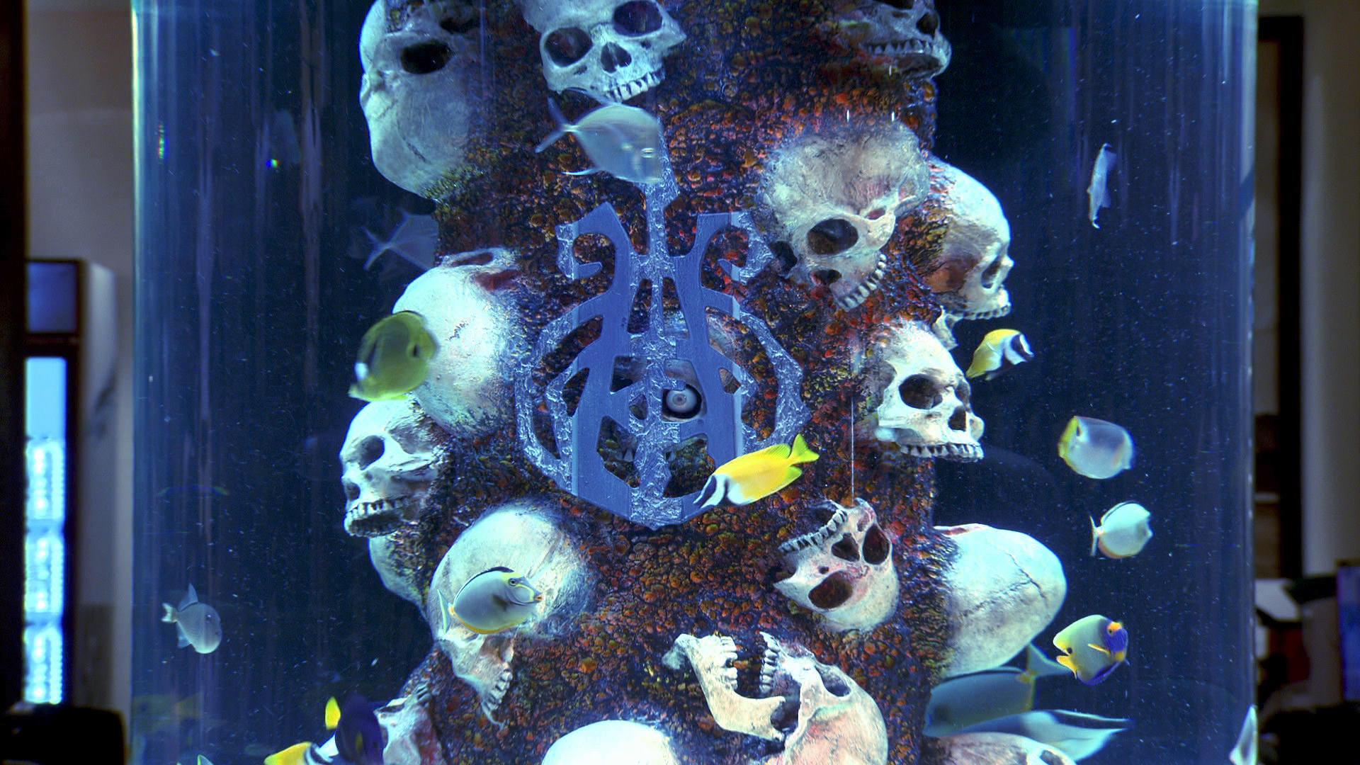 Fish tank kings netflix - Sweet Tank O Mine