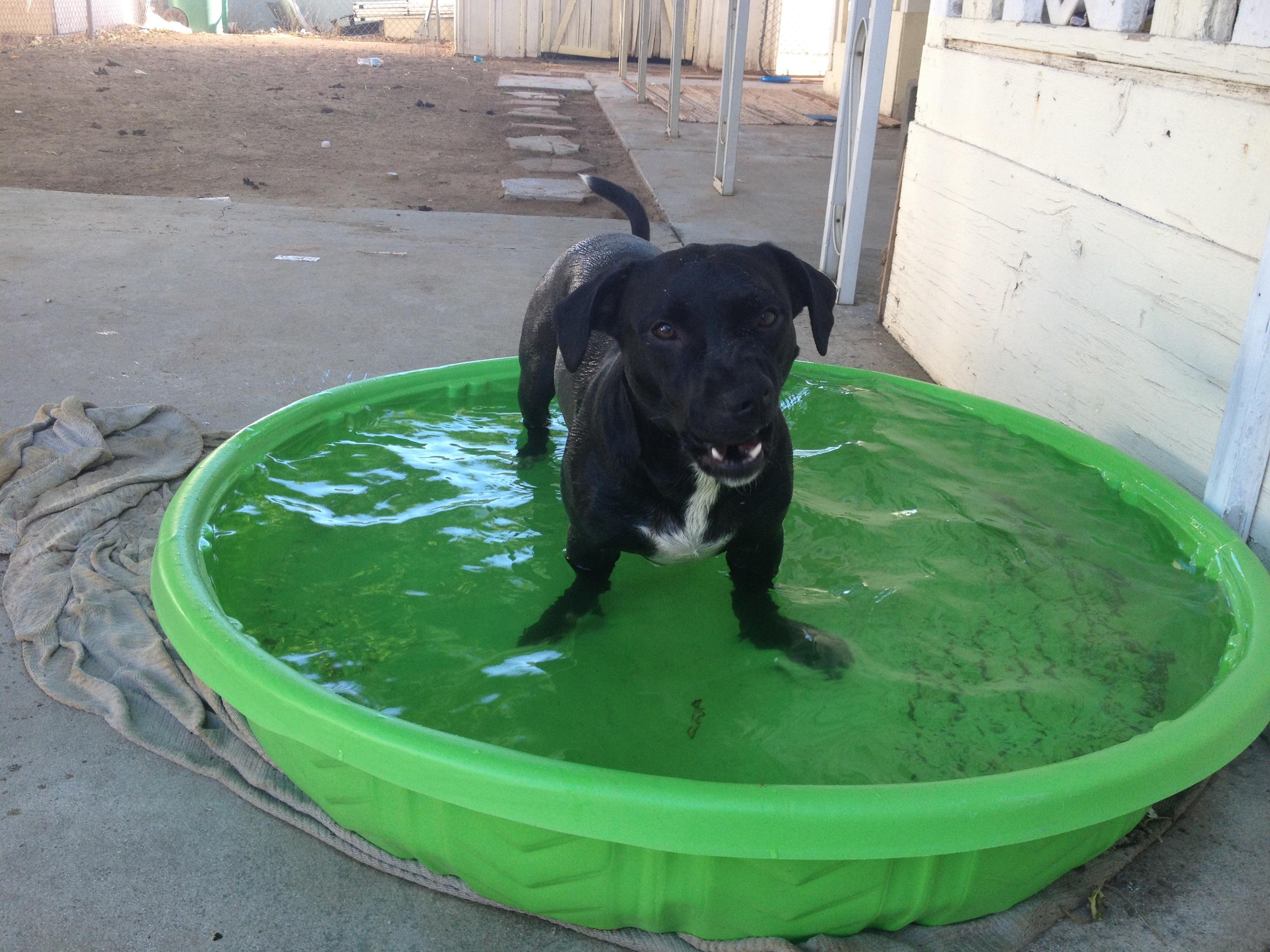 JESSE_ROSE CHILLING IN POOL 2