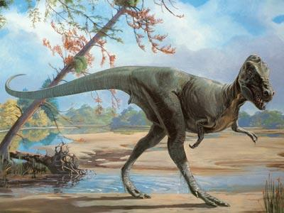 """Measuring about 30 feet (9 meters) long, the Late Cretaceous tyrannosaur Daspletosaurus was a fearsome predator with a name meaning """"frightful reptile."""" This dinosaur was very similar in structure to the next one, which is much more well-known."""