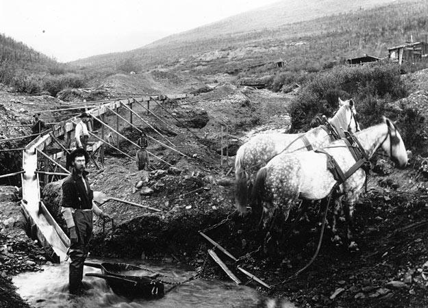 Prospectors in the Klondike gold fields use a team of horses to drag out river rock carried by a sluice from a nearby creek. With no powered machinery, all the heavy lifting was done largely by hand and the final stage always required manual panning.