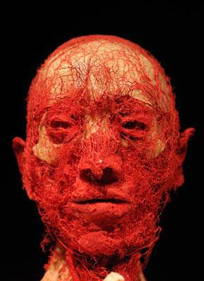 """Gunther von Hagens' often-controversial """"Body Worlds and the Mirror of Time"""" exhibition shows us just how many nerves cover the face and head of a human. The exhibit demonstrates the various systems and functions of the human body. And guess what? The brain and nervous system likely are behind every one of them."""