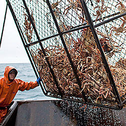Alaskan storm game deadliest catch discovery for Crab fishing game