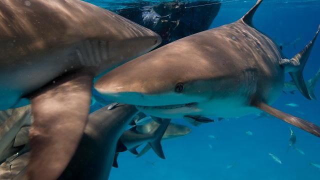 секса акула фото